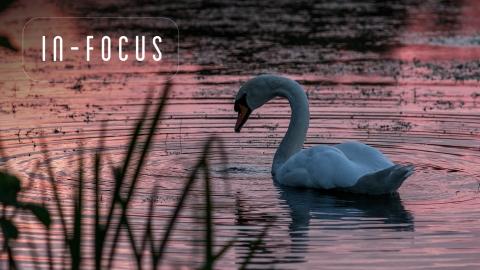 Bird Life | In-Focus | Scott Lloyd